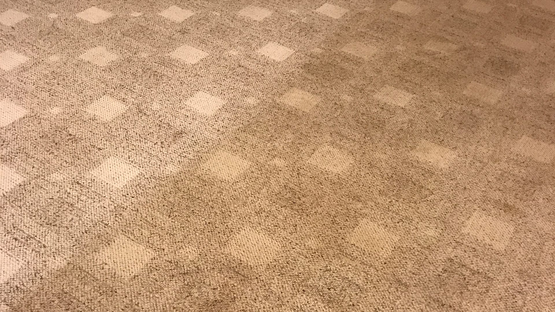 Carpet after cleaning process
